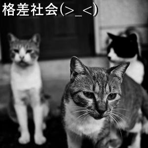 格差社会(>_<)