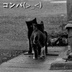 コンパ(>_<)