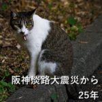 阪神淡路大震災から25年