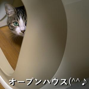 オープンハウス(^^♪