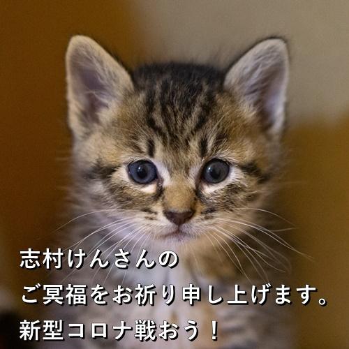 志村けんさんのご冥福をお祈り申し上げます。新型コロナと戦おう!