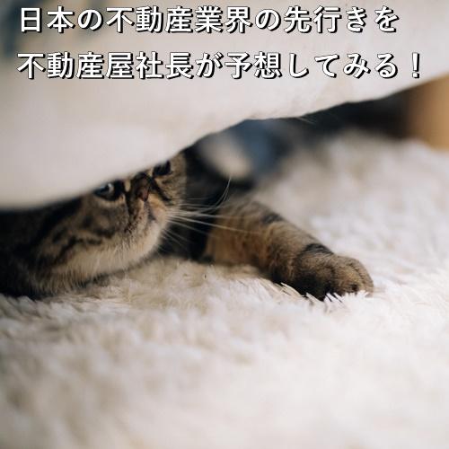 日本の不動産業界の先行きを不動産屋社長が予想してみる!
