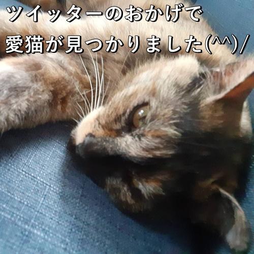 ツイッターのおかげで愛猫が見つかりました(^^)/
