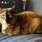 猫ねこネコ。アイちゃんとの出会い