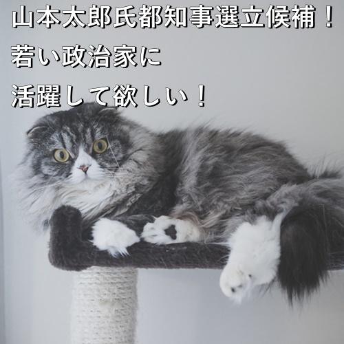 山本太郎氏都知事選立候補!若い政治家に活躍して欲しい!