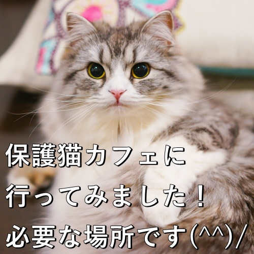 保護猫カフェに行ってみました!必要な場所です(^^)/