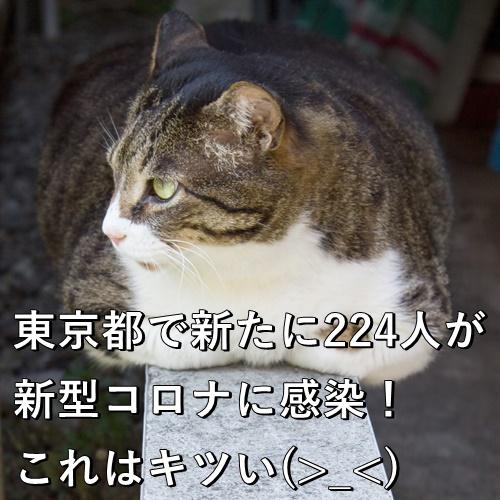 東京都で新たに224人が新型コロナに感染!これはキツい(>_<)