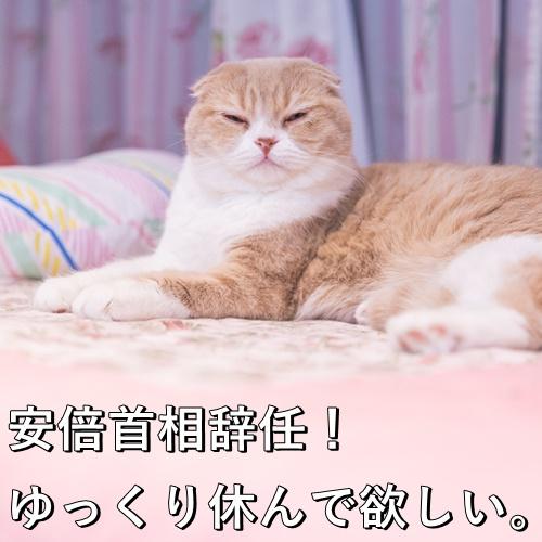 安倍首相辞任!ゆっくり休んで欲しい。