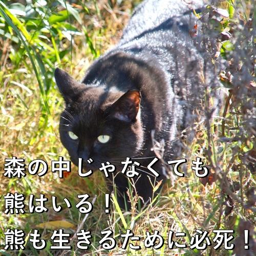 森の中じゃなくても熊はいる!熊も生きるために必死!