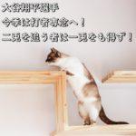 大谷翔平選手今季は打者専念へ!二兎を追う者は一兎をも得ず!