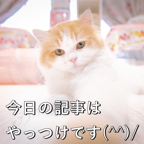 今日の記事はやっつけです(^^)/
