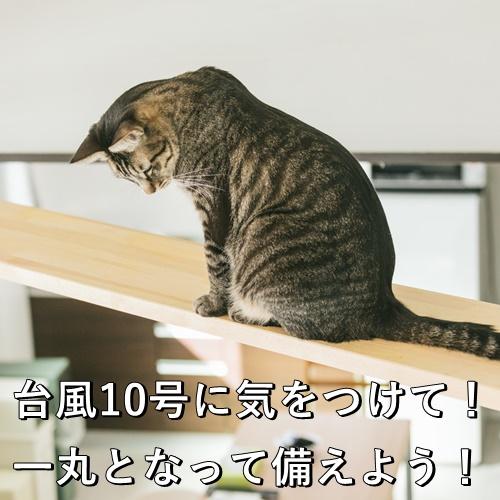 台風10号に気をつけて!一丸となって備えよう!