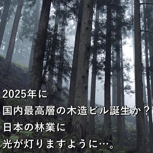 2025年に国内最高層の木造ビル誕生か?日本の林業に光が灯りますように…。