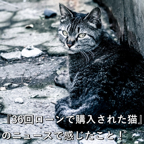『36回ローンで購入された猫』のニュースで感じたこと!