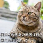 横浜市の悪臭の原因は何?備えあれば憂いなし!