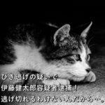 ひき逃げの疑いで伊藤健太郎容疑者逮捕!逃げ切れるわけないんだから…。