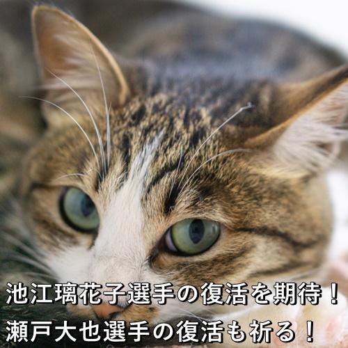 池江璃花子選手の復活を期待!瀬戸大也選手の復活も祈る!