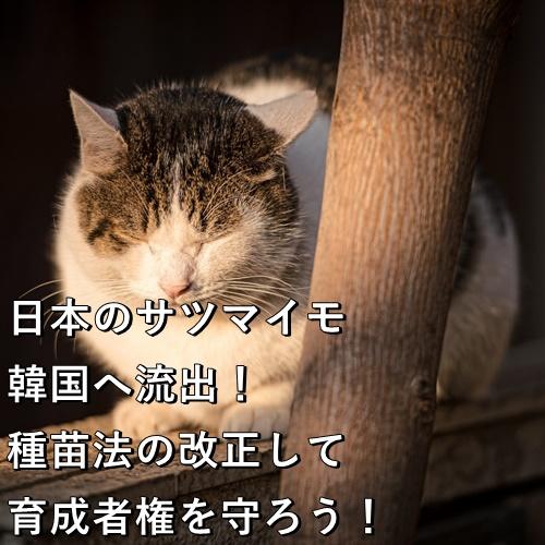 日本のサツマイモ 韓国へ流出!種苗法を改正して育成者権を守ろう!