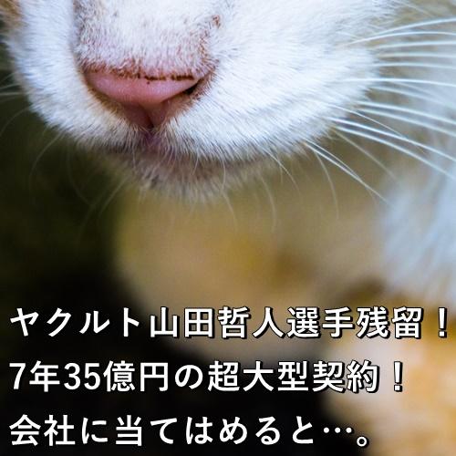 ヤクルト山田哲人選手残留!7年35億円の超大型契約!会社に当てはめると…。