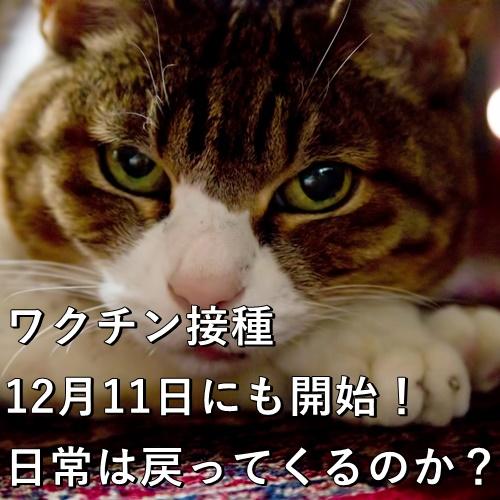 ワクチン接種、12月11日にも開始!日常は戻ってくるのか?
