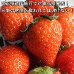 改正種苗法施行で対象品種発表!日本の財産を奪われてはいけない!