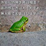 カエルの鳴き声は騒音?音の感じ方は人それぞれ…。無人島でも音はします!