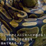 ペットのアミメニシキヘビが逃げる!ペットを飼うことの責任を改めて考えるべき…。
